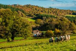 Autumn in the Ceiriog Valley