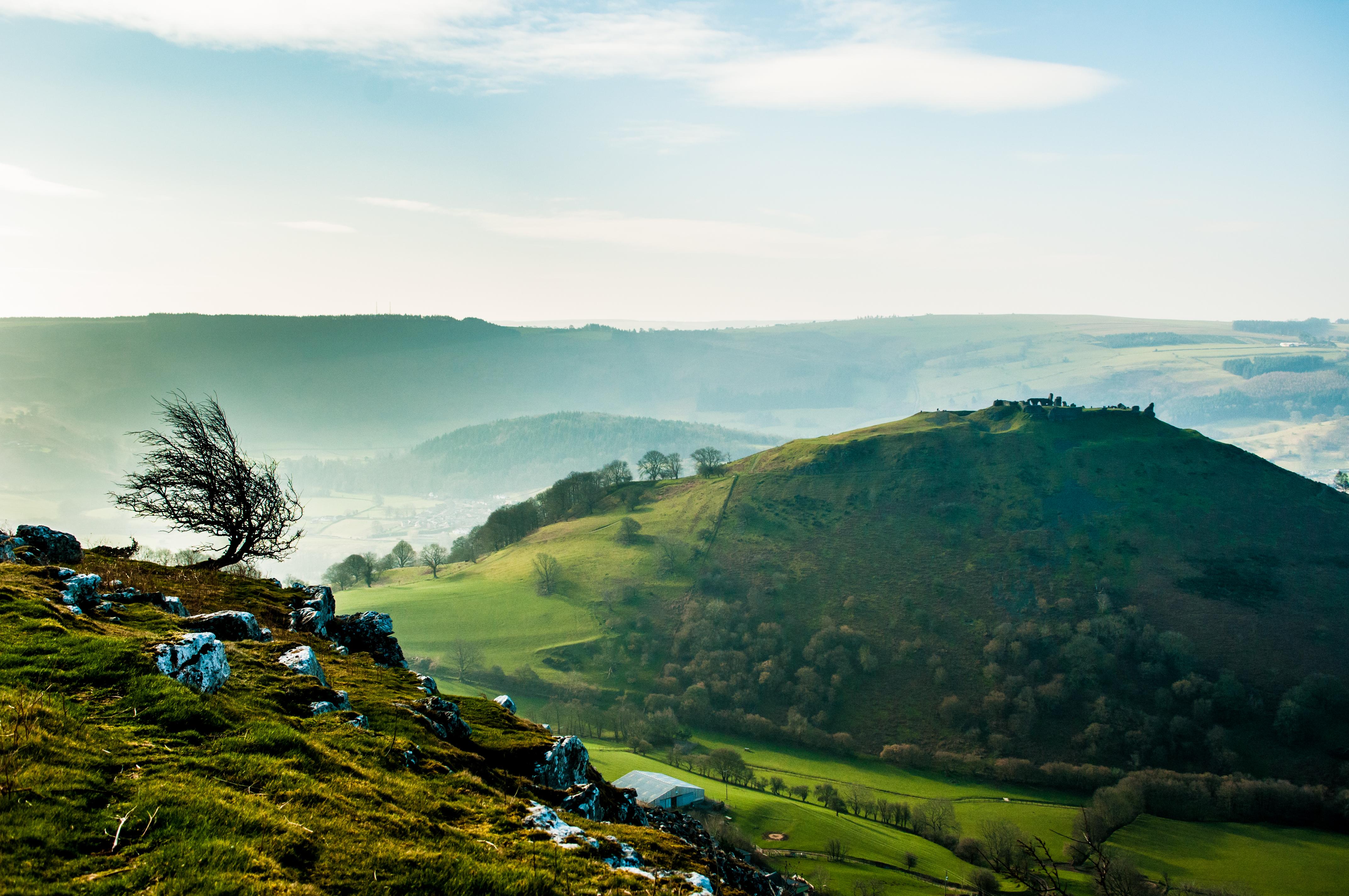 Windswept tree and Dinas Bran