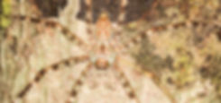 WLH_5569-2.jpg