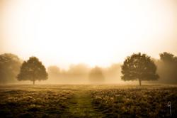 Dawn at Attingham park