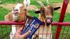 Trupo's Treats brings nostalgia to ethically-sourced vegan chocolate