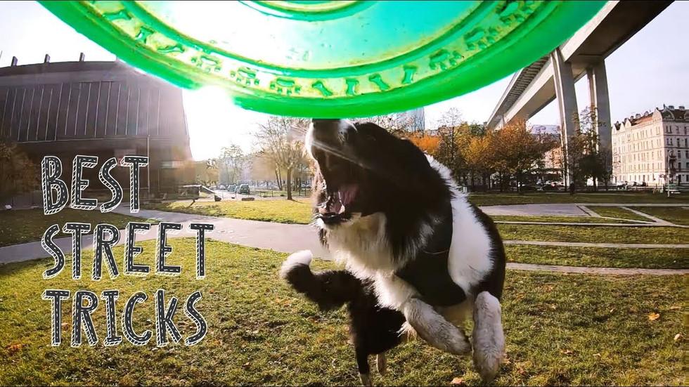 10 nejlepších street triků mého psa / TOP 10 tricks / slowmotion #2