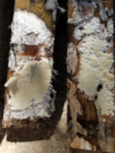 rotten deck with mold.jpg