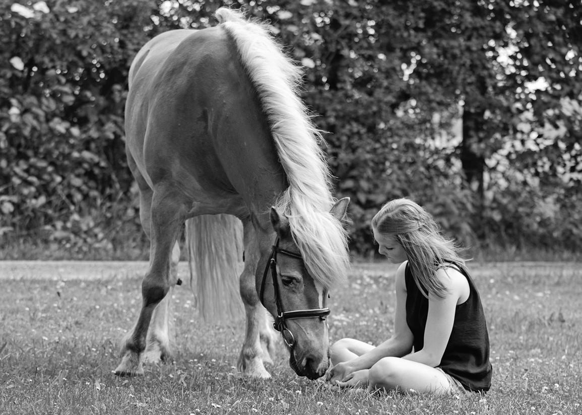 Fotoatelier Iris Jensen Tiere 4 Pfoten Pferde Hunde Lämmer