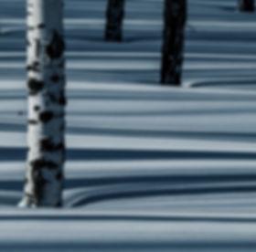 sav_wintershadows_MAG_edited.jpg