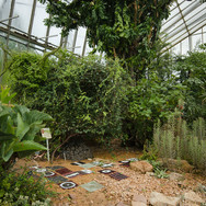 Journey, temporary glass installation, Royal Botanic Gardens, Edinburgh, 2013 (image credit Shannon Tofts)