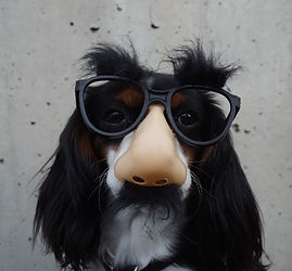 Dog%20in%20disguise_edited.jpg