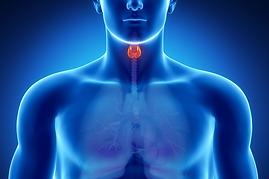 cuello y tiroides.png