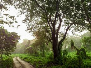 Retrouver la biodiversité