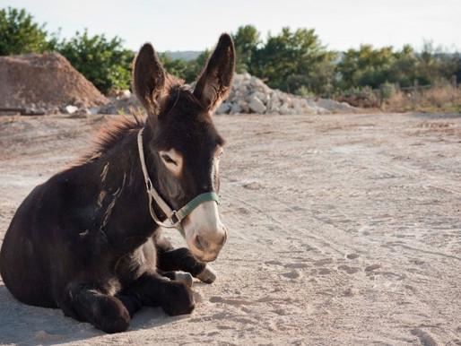 A Talking Donkey