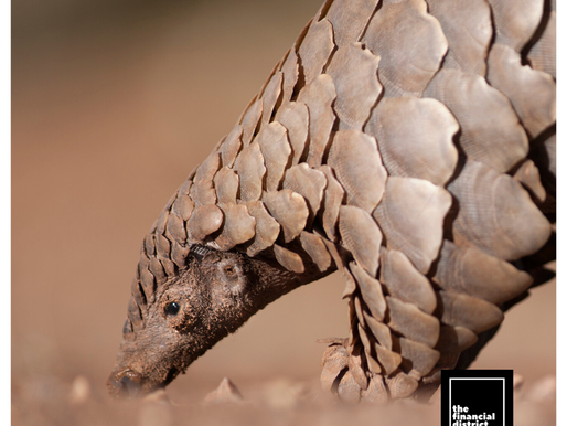 CHINA ORDERS PROTECTION FOR PANGOLINS