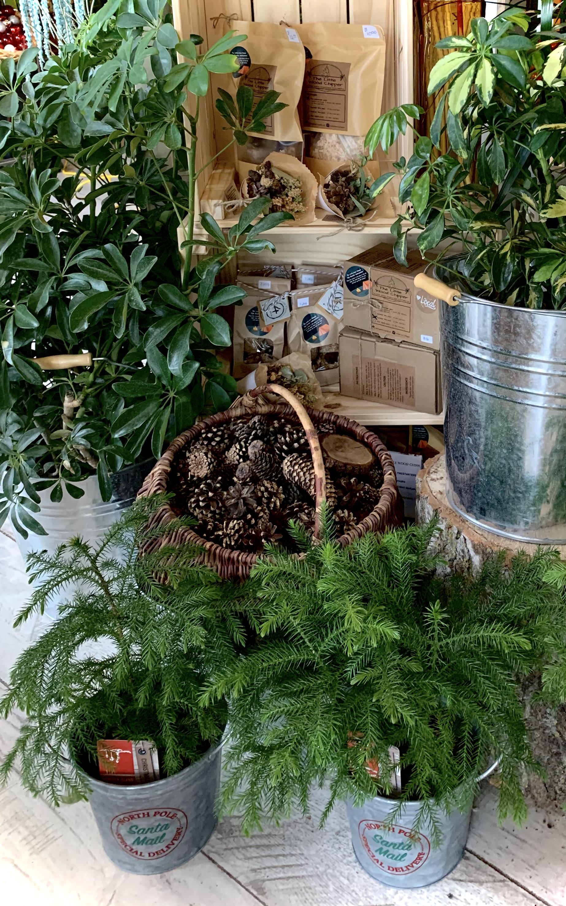Assorted plants & Fire starters