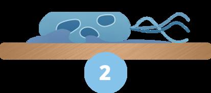 bakterie2.png