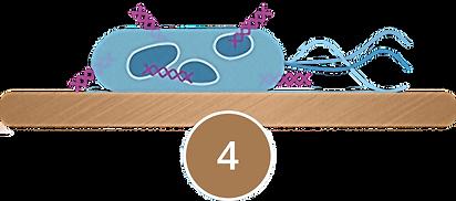 bakterieD.png