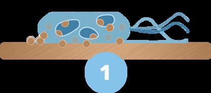 bakterie1.png