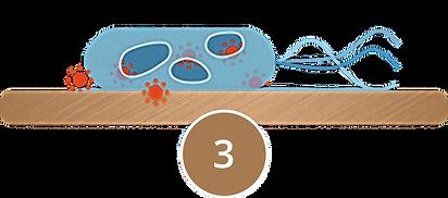 bakterieC.png