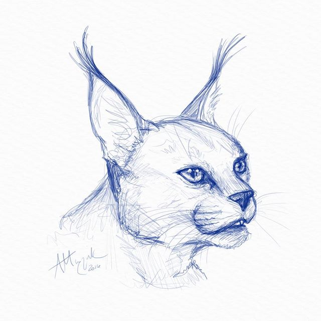 digital_sketch2