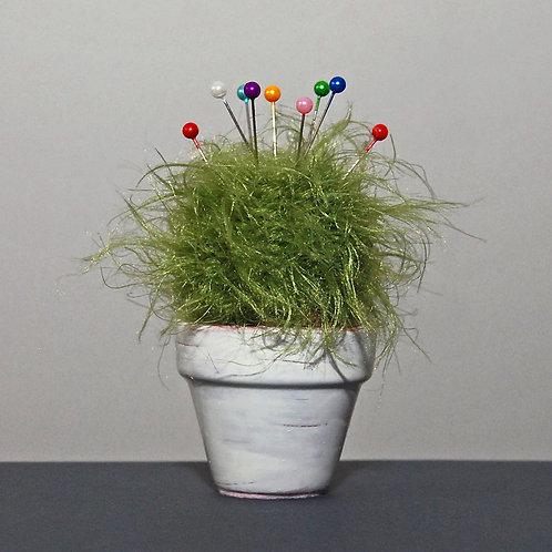 Stecknadel-Kaktus
