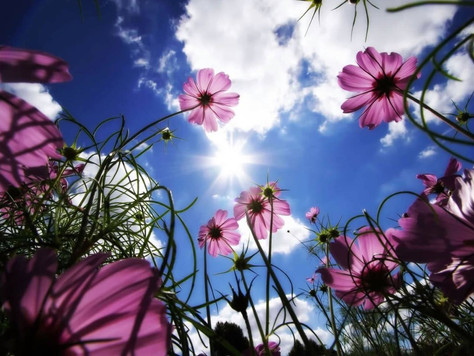 SPRING Renewal for the Body, Mind & Soul