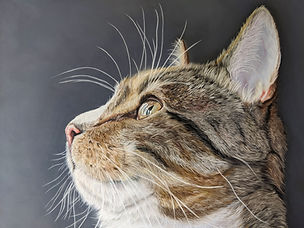 Cat portrait in pastels by Kat Skorka