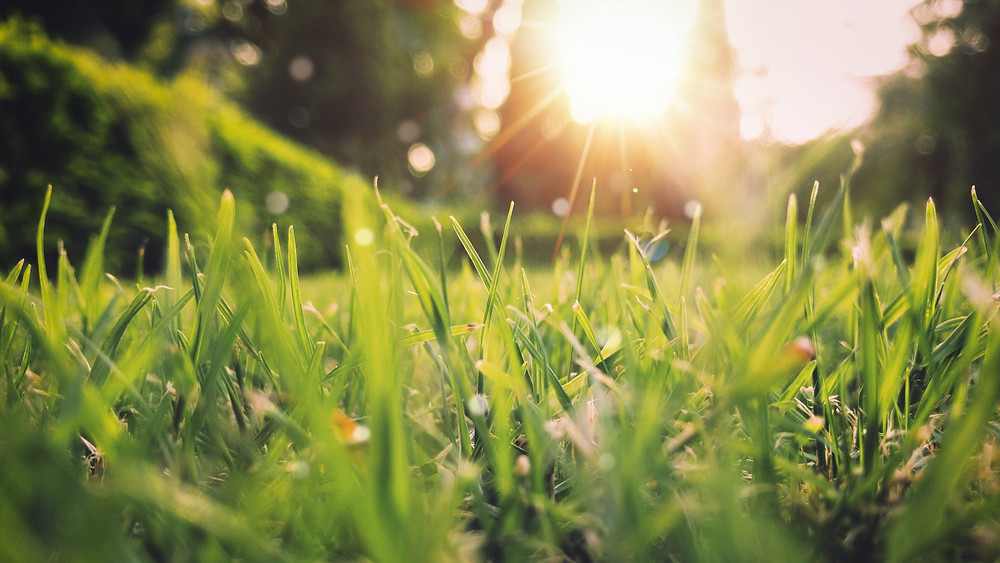 Grassy field with sunlight