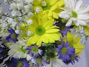 Fresh_Cut_Flowers_A_Daisy_A_Day_Lougheed