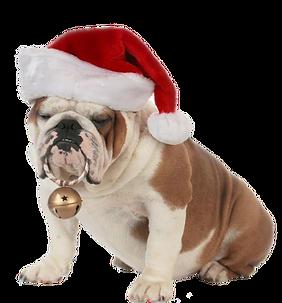 Bulldog santa.png
