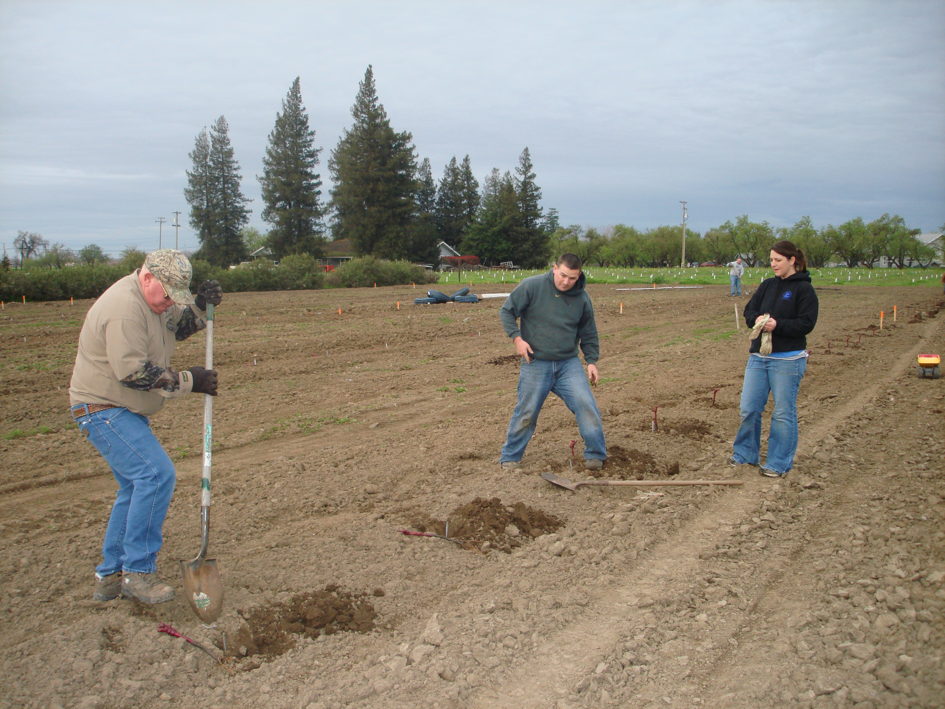 Planting 3-10