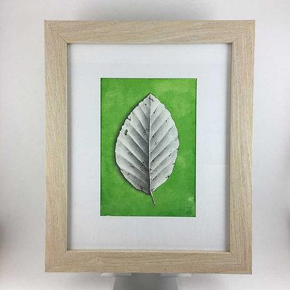 Beech Leaf Drawing
