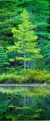 Evergreen Shoreline