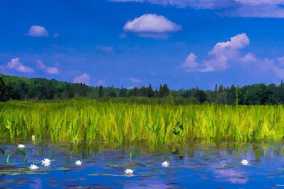 Moose River Shoreline