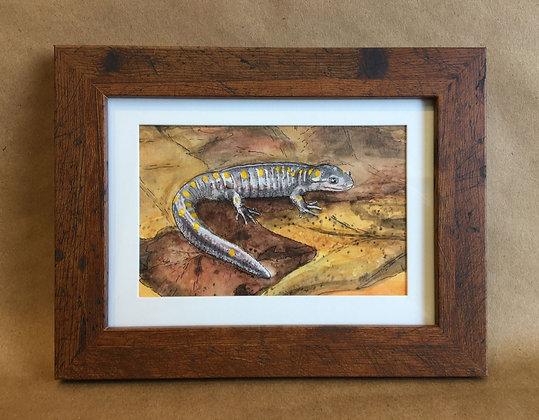 Spotted Salamander, original watercolor