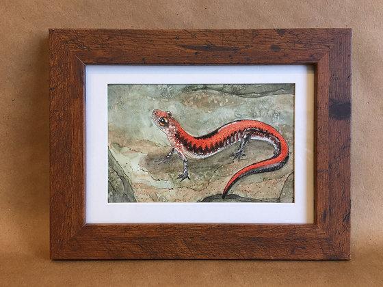 Red-backed Salamander, original watercolor
