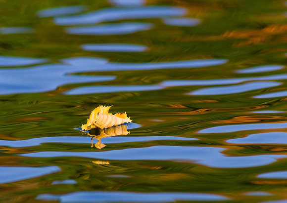 Adrift in Autumn Waters