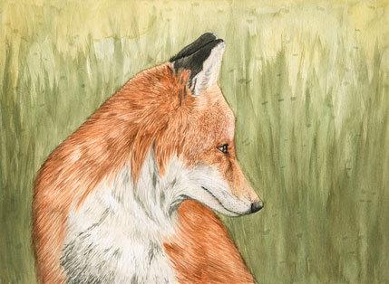 Red Fox, print