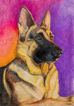 Tiffany-Smith-colored-pencil-drawing-ger