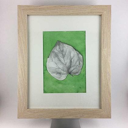 Redbud Leaf Drawing