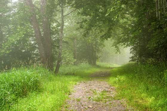 Foggy Abandoned Lane