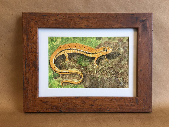Northern Two-lined Salamander, original watercolor
