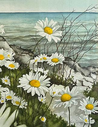 Lake Erie Daisies, Original Watercolor