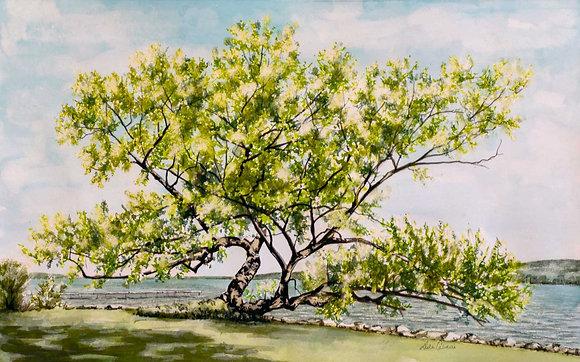 "Print, ""Lake Tree"""