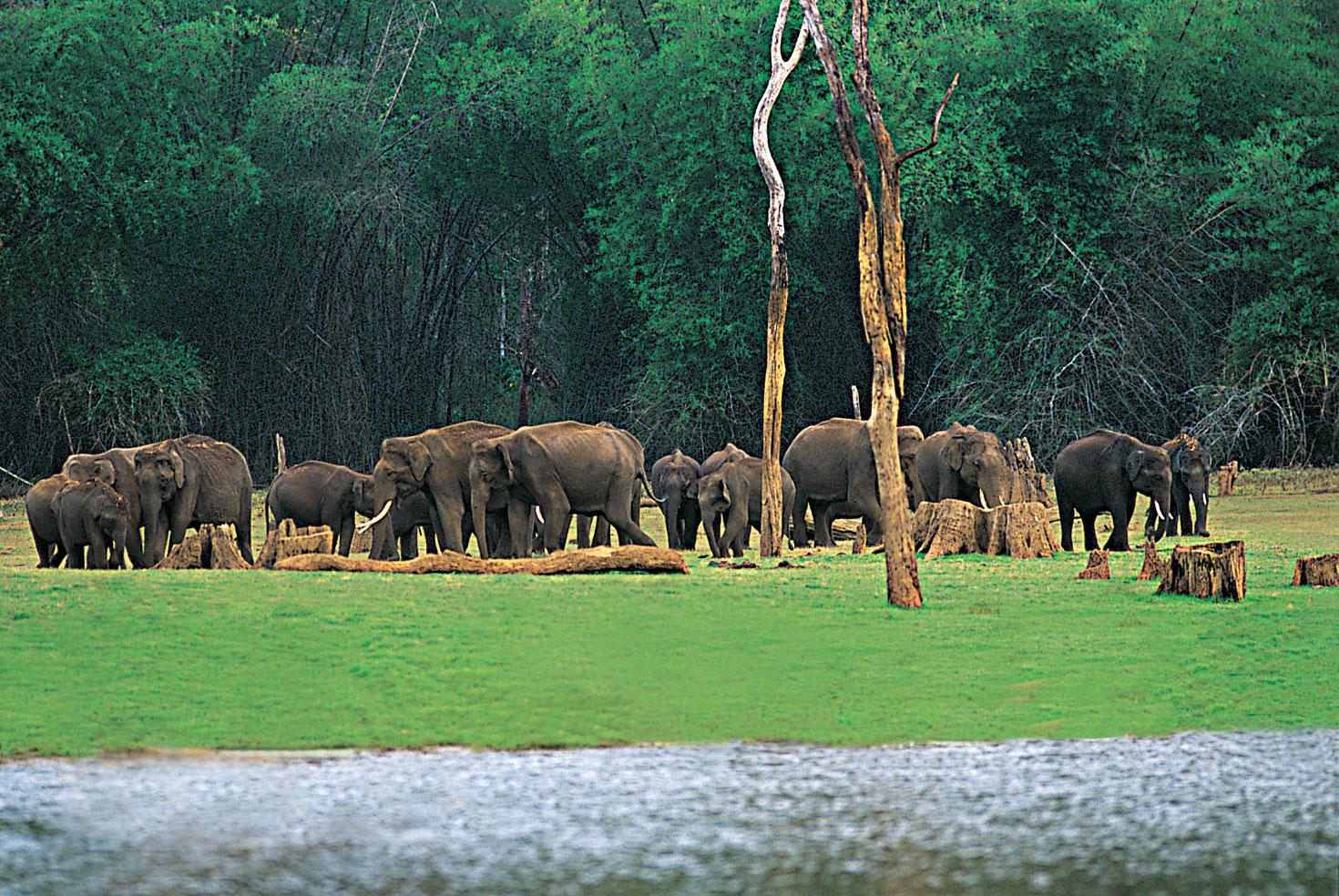 Éléphants à Periyar, Thekkady