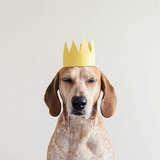 dog (9).jpg
