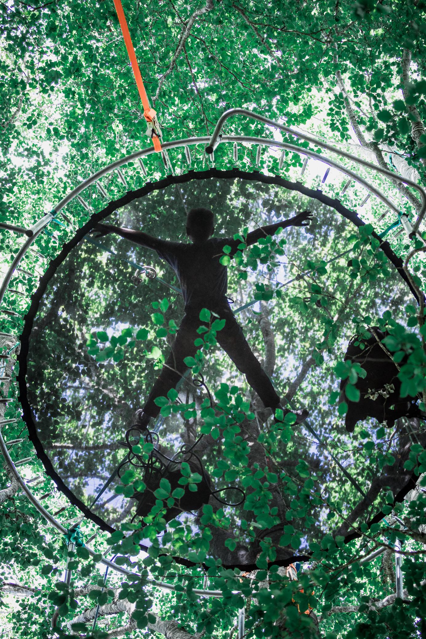 Voyage au coeur des arbres