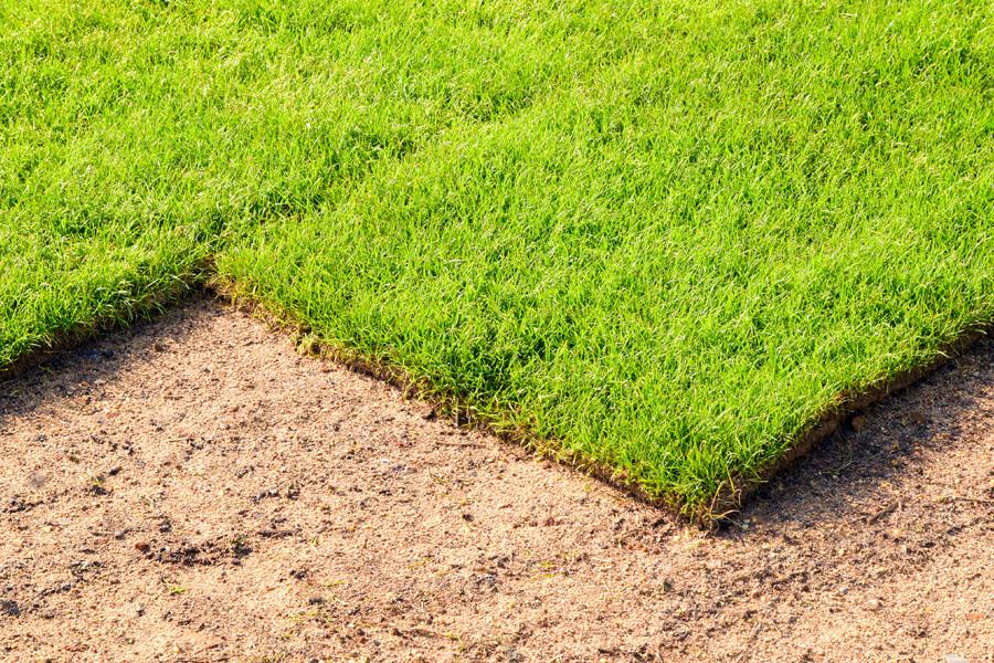 Turf Grass Malaysia