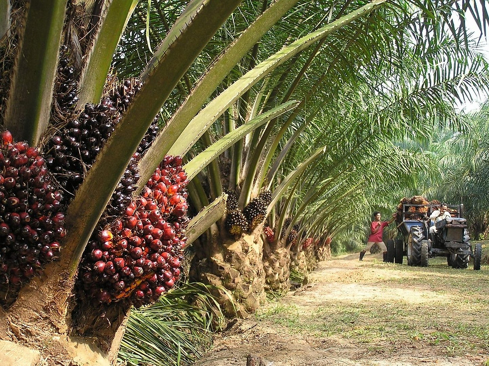 Palm Oil Factory Maintenance Contractor Malaysia