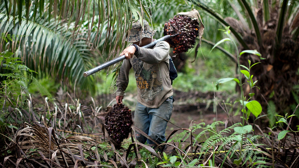 Palm Oil Mill Contractor Malaysia