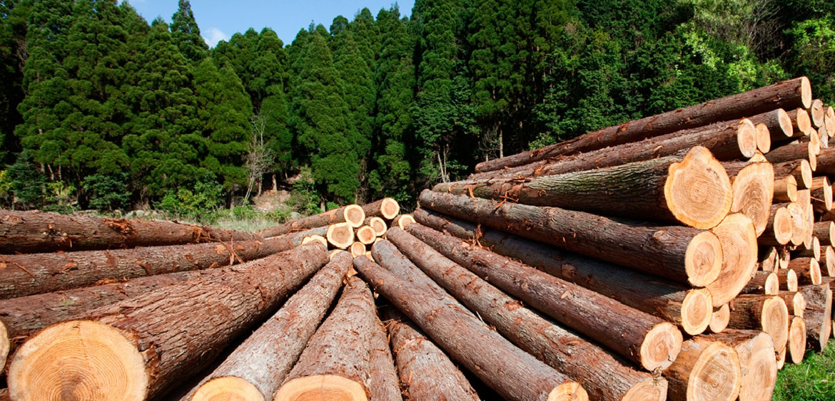 Timber For Construction In Malaysia