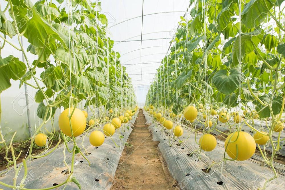 Greenhouse Farm Contractor Malaysia