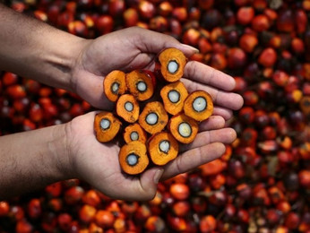 Palm Oil Mill Contractor Malaysia | Factory & Equipment | Engineering & Maintenance